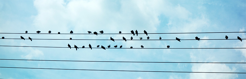 Contact - Birds on a telephone wire.